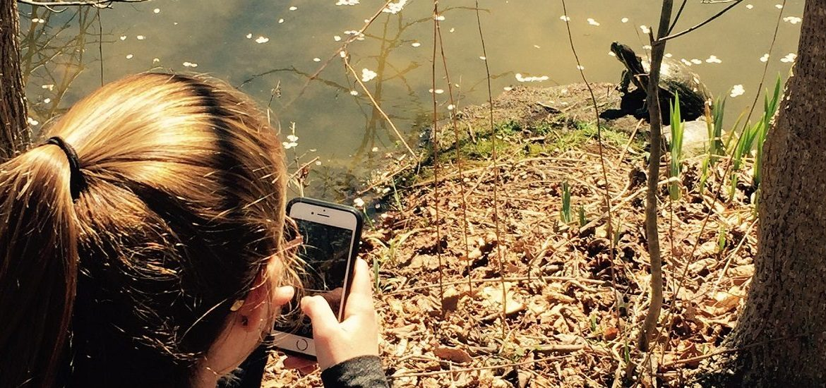 Kelly takes a photograph of a turtle sitting on a rock