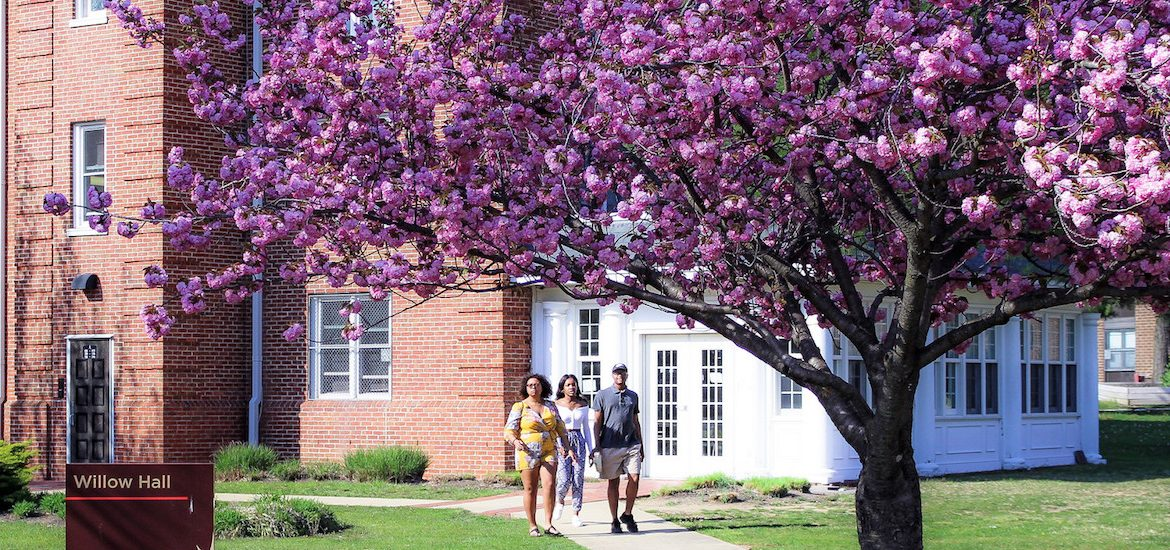 people walking near willow hall under cherry blossom trees