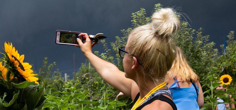 Blonde female student takes a selfie at a sunflower field near Rowan University