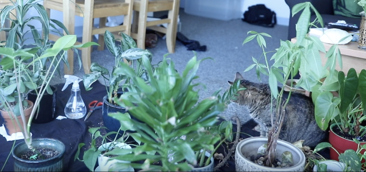 A cat sitting in plants