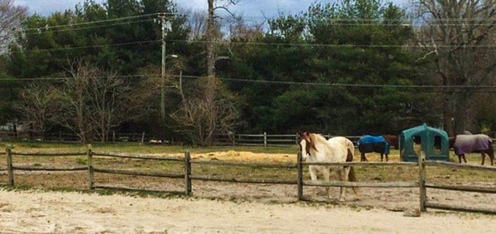 Horses on a field at a farm.
