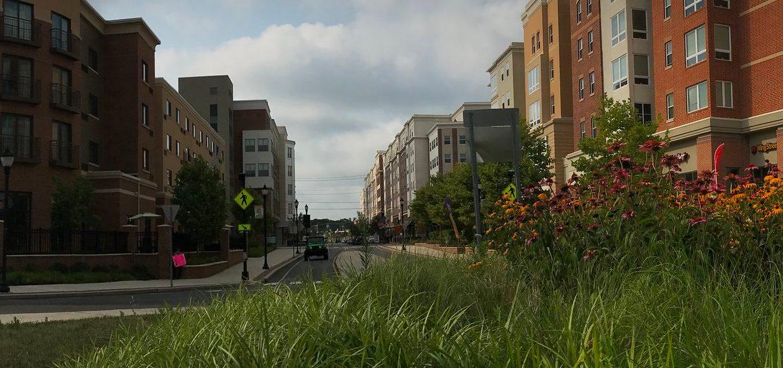 Grassy photo of Whitney Center.