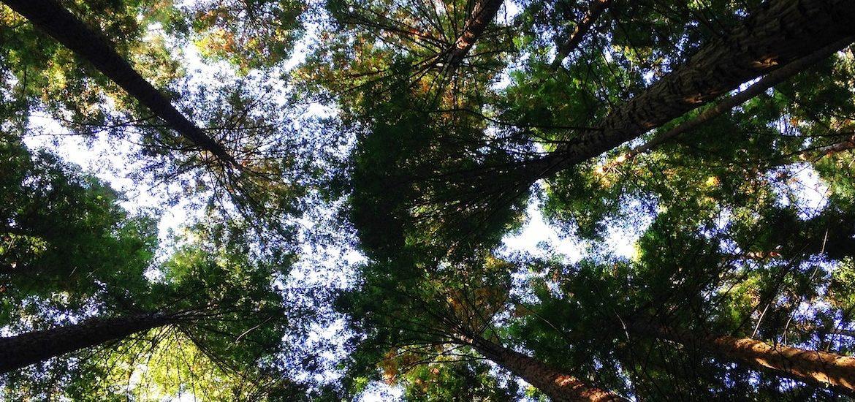 Photo of trees.