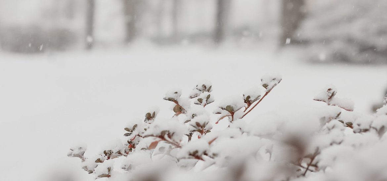 Snowy scene on campus.