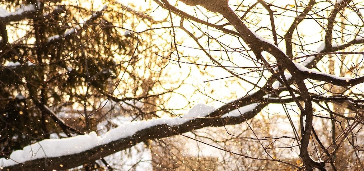 Tree branch covered with snow.