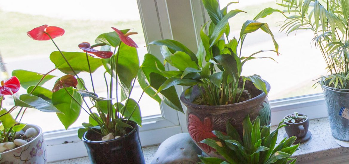 Close up of houseplants on a windowsill in Willow Hall.