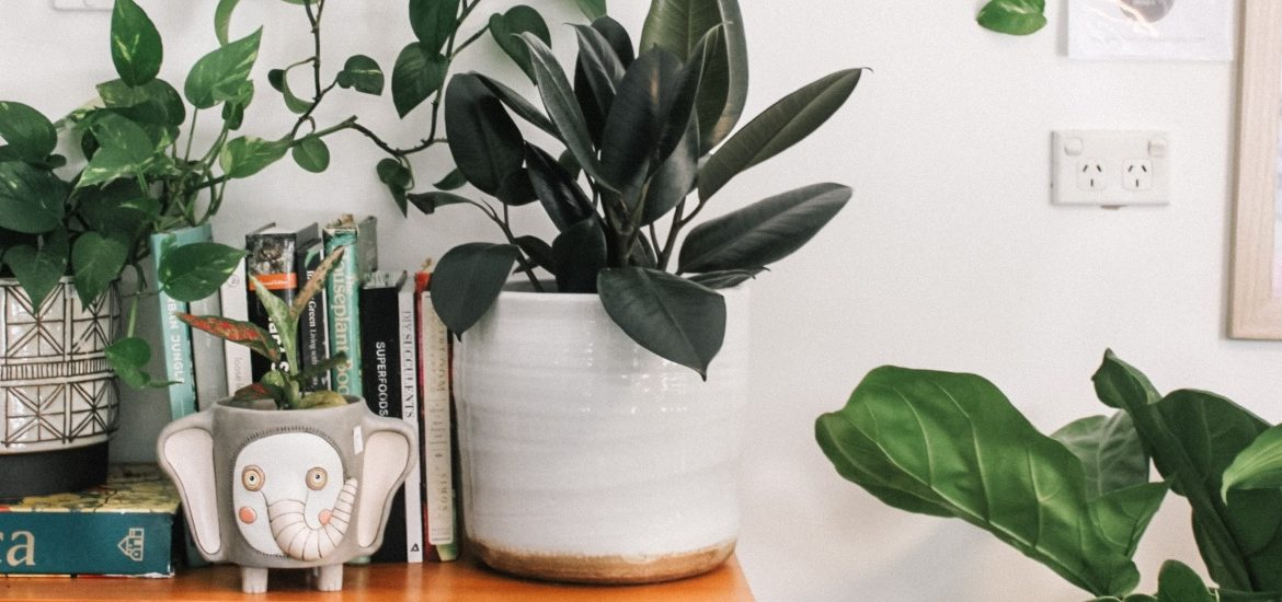 A stock image of house plants and books.