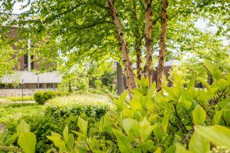 Exterior shot of greenery on Rowan's campus.